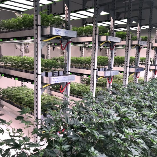 Multi-Level Benching Systems at Zwart Systems | Greenhouse Irrigation & Automation Specialists, Beamsville, Ontario