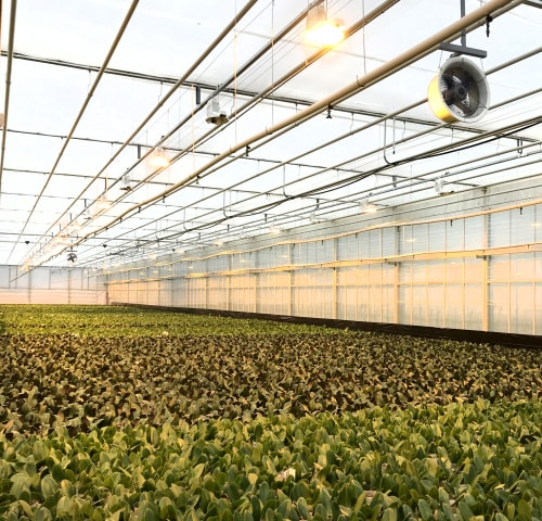 Overhead Nozzle Irrigation at Zwart Systems | Greenhouse Irrigation & Automation Specialists, Beamsville, Ontario